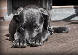 värktabletter hundar